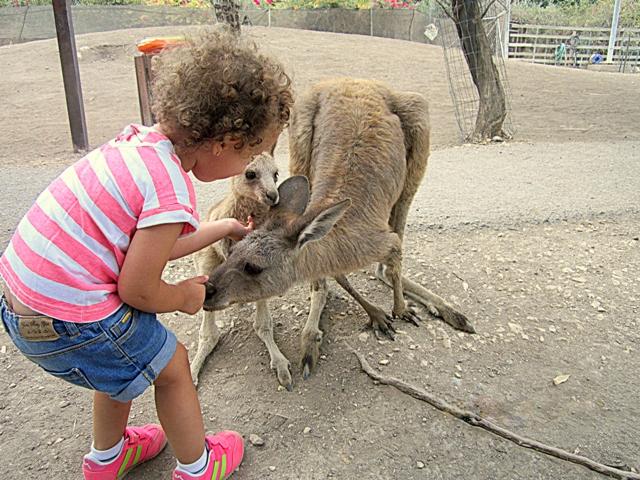 deti-i-kenguru
