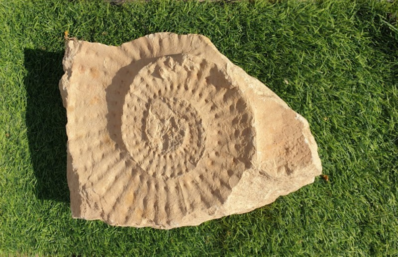 otpechatok-ammonita-v-izvestnyake