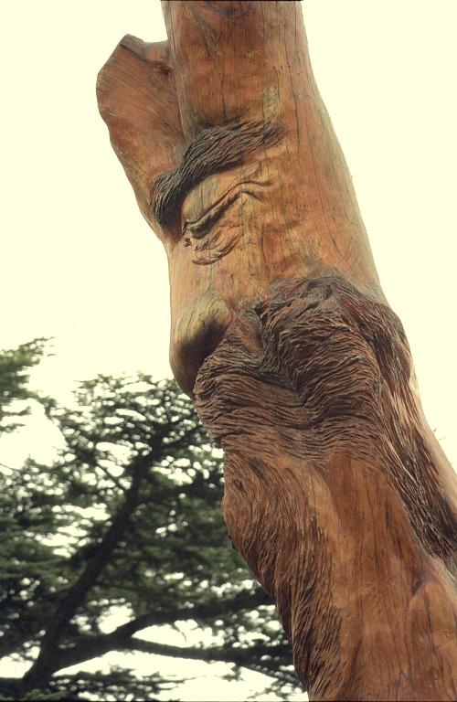 livanskij-kedr-drevesina