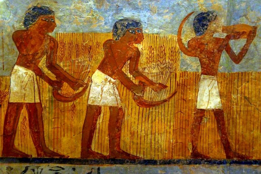 zhatva-v-drevnem-egipte-stennaya-rospis-iz-grobnitsy-unsu-ok-1450-g-do-ne-luvr-parizh-vikipediya